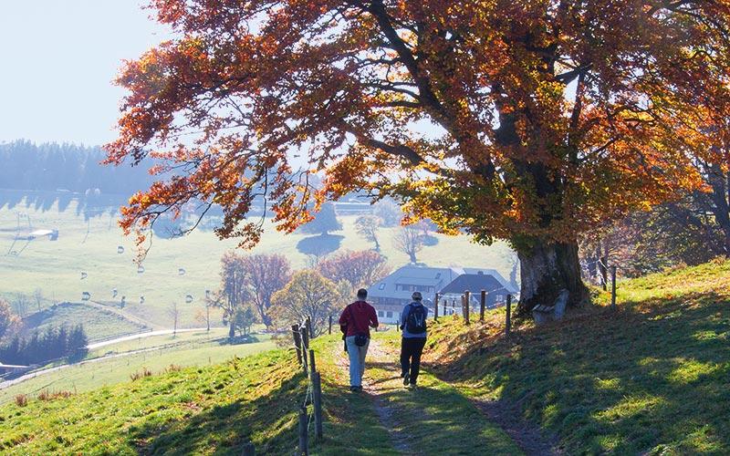 Schwarzwald Wandern Biken Trekking Mountainbike Europapark